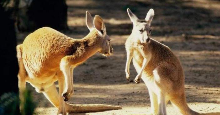 出國工作小視頻,海外工作攻略,出國打工頭條-你知道澳大利亞哪些工作很有前途嗎?